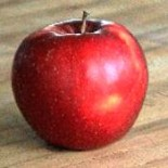 """Яблоня плодовая трехлетка """"Брянское"""""""