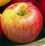 """Яблоня плодовая двухлетка """"Яблочный спас"""""""
