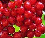"""Калина обыкновенная плодовая """"Таежные рубины"""" 0.5-0.8 м с5"""